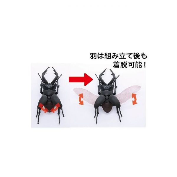 Living Thing Arc: Stag Beetle