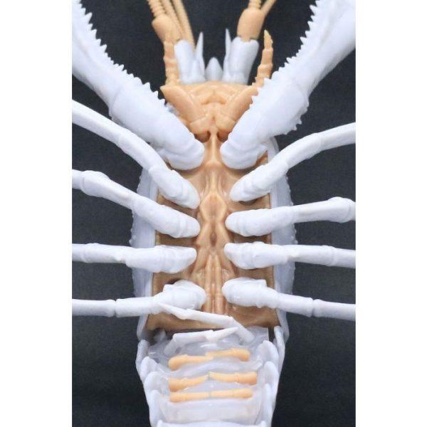 Creature Arc Procambarus Clarkii / Louisiana Crawfish