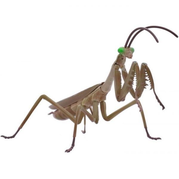 Living Thing Arc Tenodera Aridifolia / Japanese Giant Mantis
