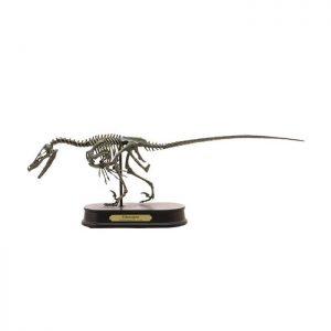 Velociraptor Skeleton Model